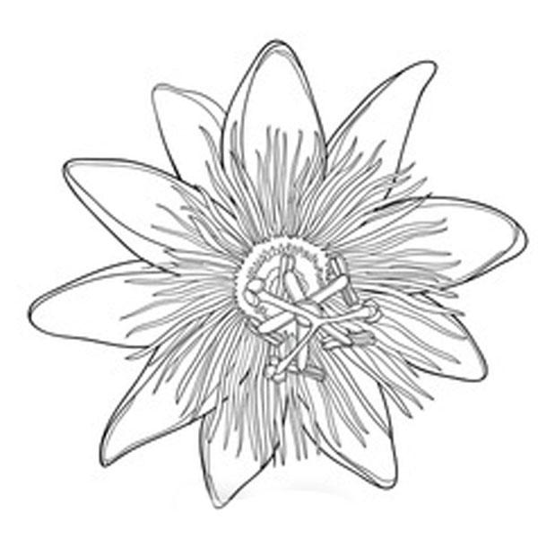 Naturheilpraxis Corinna Menke - Waldenburg - Osteopathie - Homöopathie - Physiotherapie - Naturheilverfahren - Lymphdrainage - Akupunktur - Spezielle Therapieangebote - Zusatztherapie - Datenschutz - Impressum